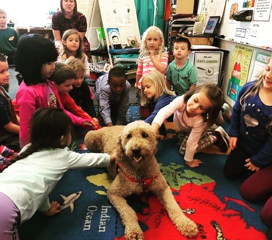 Thank you to Jen Wagoner who brought her therapy dog Zoey to our first grade classes. When children are given opportunities to read to therapy dogs it builds excitement about reading. #readers #therapydog #LCS_HaveItAll www.lansingchristianschool.org